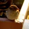 Bird1024x768.JPG