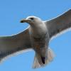 Birdfly.jpg