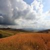 fields.jpg